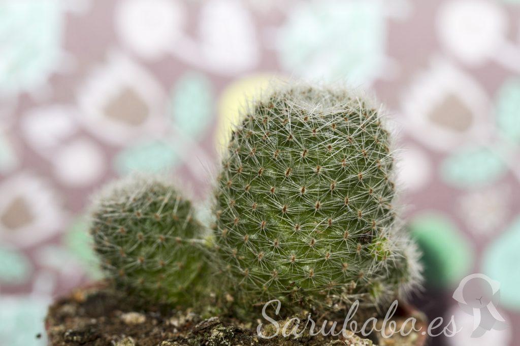 Cactus desconocido