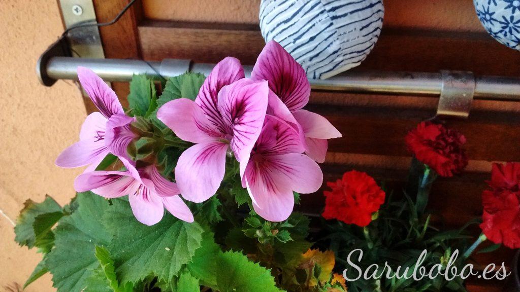 8 razones para crear tu jardín secreto